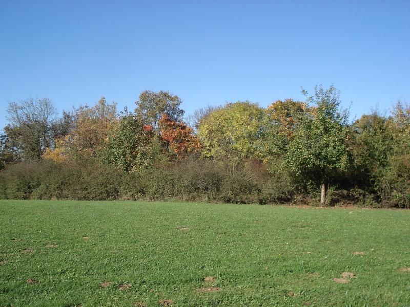 Rasen auf dem Riedberg