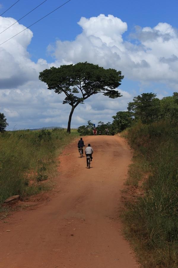 Eine Schirmakazie, der quintessentielle Afrika-Baum.