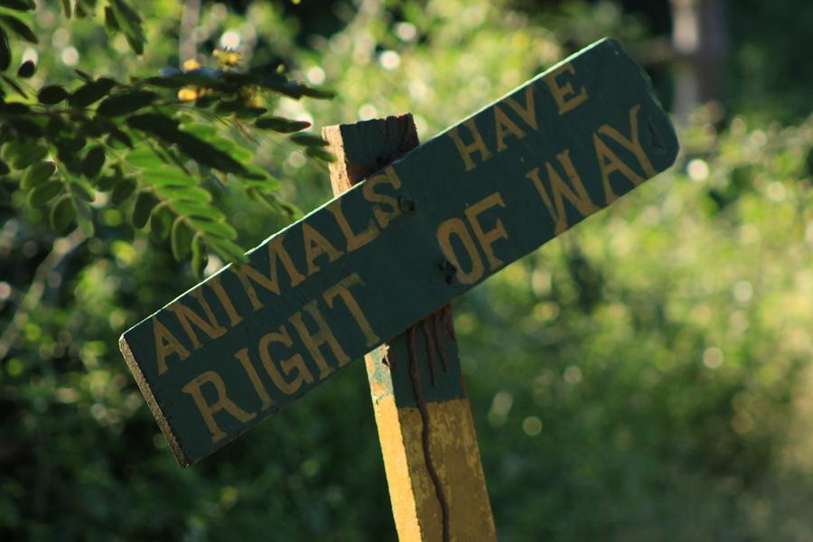 Tiere haben Vorfahrt, wird vor der Einfahrt in den South Luangwa National Park klargestellt.